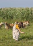 Ein junges Mädchen unter einer Herde von Ziegen stockfotos