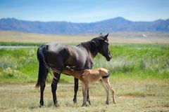 Ein junges Pferd mit einem Fohlen Stockbild