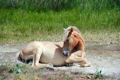 Ein junges Pferd, stehend aus den Grund still Lizenzfreie Stockbilder