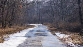 Ein junges Rotwild, das die Straße durchläuft stockbild