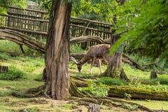 Ein junges Rotwild isst saftiges Gras lizenzfreies stockfoto