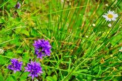 Ein Käfer auf einer purpurroten Blume Stockbild