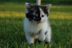 Ein Kätzchen auf dem Gras Stockfotos