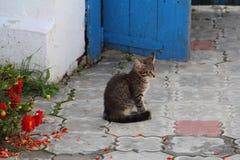 Ein Kätzchen, das auf Steinboden sitzt lizenzfreie stockbilder