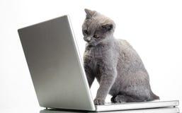 Ein Kätzchen und ein Laptop Lizenzfreies Stockbild