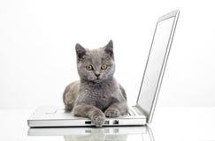 Ein Kätzchen und ein Laptop Stockfotografie