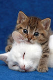Ein Kätzchen und seine Mutter Stockfotos