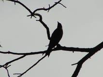 Ein königlicher Vogel Lizenzfreies Stockbild
