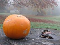 Ein Kürbis im Herbstlaub Stockfoto