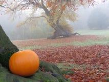 Ein Kürbis im Herbstlaub Lizenzfreies Stockfoto