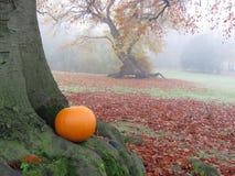 Ein Kürbis im Herbstlaub Stockfotografie