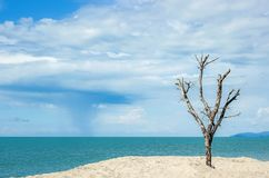 Ein kahler Baum auf Strand mit blauem Himmel lizenzfreie stockfotos