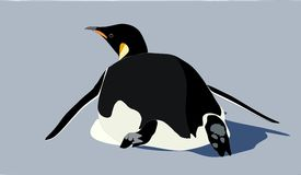 Ein Kaiser-Pinguin, der auf seinen Bauch schiebt Stockfotografie