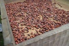 Ein Kakaosamen im Kasten in der Vorbereitung, zum der Schokolade zu machen stockbilder