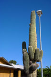 Ein Kaktus in Arizona Lizenzfreie Stockbilder