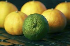 Ein Kalk unter Gruppe Zitronen Stockbilder