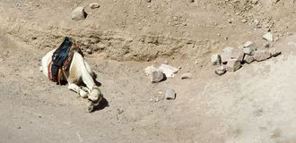 Ein Kamel lizenzfreie stockfotografie
