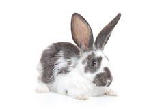 Ein Kaninchen Lizenzfreies Stockbild