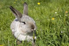 Ein Kaninchen Lizenzfreies Stockfoto
