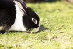 Ein Kaninchen Lizenzfreie Stockbilder