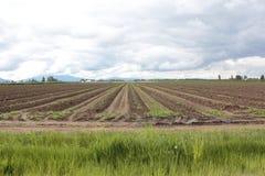 Ein Kartoffel-Bauernhof Lizenzfreie Stockfotografie