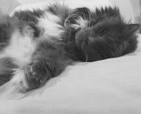 Ein Katze ` s Leben Lizenzfreies Stockfoto
