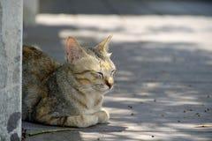 Ein Katzengefühlkomfort Lizenzfreies Stockfoto