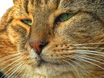 Ein Katzenporträt Stockbild
