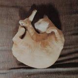 Ein Katzenschlafen Stockfotos