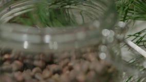 Ein Kegel auf einer Kiefer Koniferenbaum, grüner Kegel auf Zeder stock video