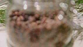 Ein Kegel auf einer Kiefer Koniferenbaum, grüner Kegel auf Zeder stock video footage