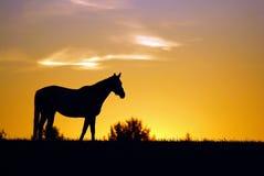 Ein Kentucky-Sonnenaufgang lizenzfreies stockfoto