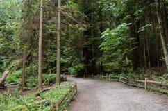 Ein Kiesweg mit einem Bretterzaun in einem dichten immergrünen Koniferenwald stockfotos