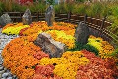 Ein Kiku und japanisches ein Chrysantheme-Blumen-Erscheinen stockbilder