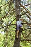 Ein Kind gestiegen auf einem Kieferbaum In-field. Lizenzfreies Stockfoto