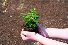 Ein Kind mit kleiner Gr?npflanze lizenzfreies stockfoto