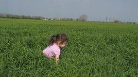 Ein Kind spielt auf dem Gebiet Das kleine Mädchen fällt in das hohe Gras Ein Kind auf einem Gebiet des Weizens stock footage