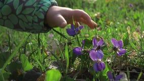 Ein Kind versucht, eine violette Blume im Park auszuwählen Retten Sie die Welt für unsere Kinder, stock video