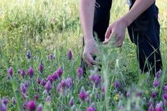 Ein Kind wählt purpurrote Blumen aus lizenzfreie stockfotografie
