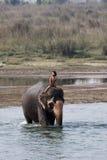 Ein Kindreiten auf Elefanten Lizenzfreie Stockfotografie