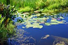 Ein klarer blauer See Stockbild