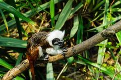 Ein kleiner Affe Lizenzfreies Stockbild