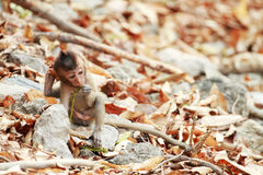 Ein kleiner Affe, der in der lustigen Tat sitzt Stockbilder