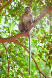 Ein kleiner Affe, der auf einem Baumast sitzt Stockfoto
