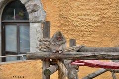 Ein kleiner Affe mit Mutter Stockfoto
