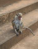 Ein kleiner Affe sitzt auf den Steinschritten Lizenzfreie Stockbilder