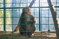 Ein kleiner Affe sitzt in einem Käfig Lizenzfreie Stockfotos