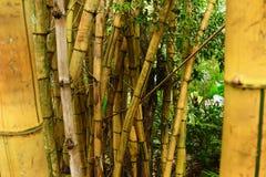 Ein kleiner Bambuswald stockbild