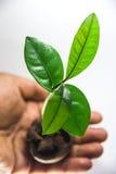 ein kleiner Baum - Ökologiekonzept Lizenzfreie Stockbilder
