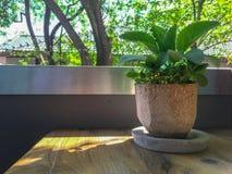 Ein kleiner Baum in einem Topf auf einer Tabelle gelegen auf dem Balkon stockfotos